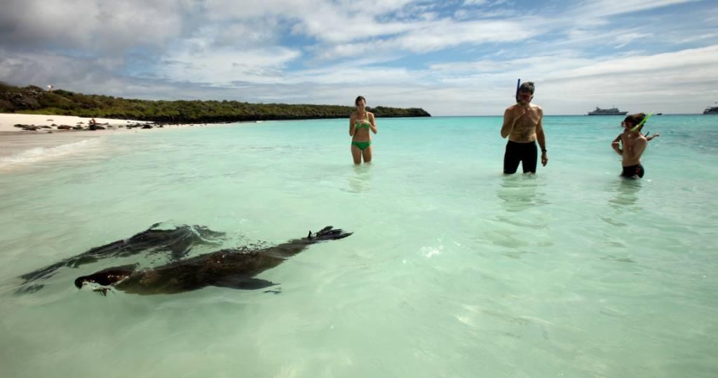 Galapagos PRO Insel Espanola Schnorcheln und Schwimmen mit Seelöwen