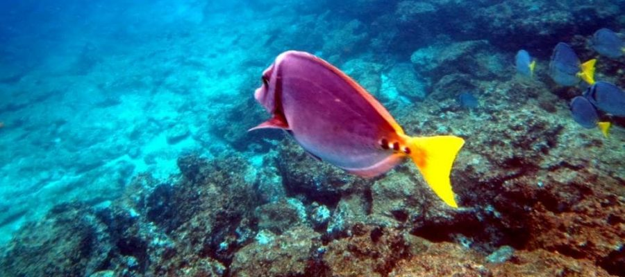 Dive with the colorful fish on Espanola Island