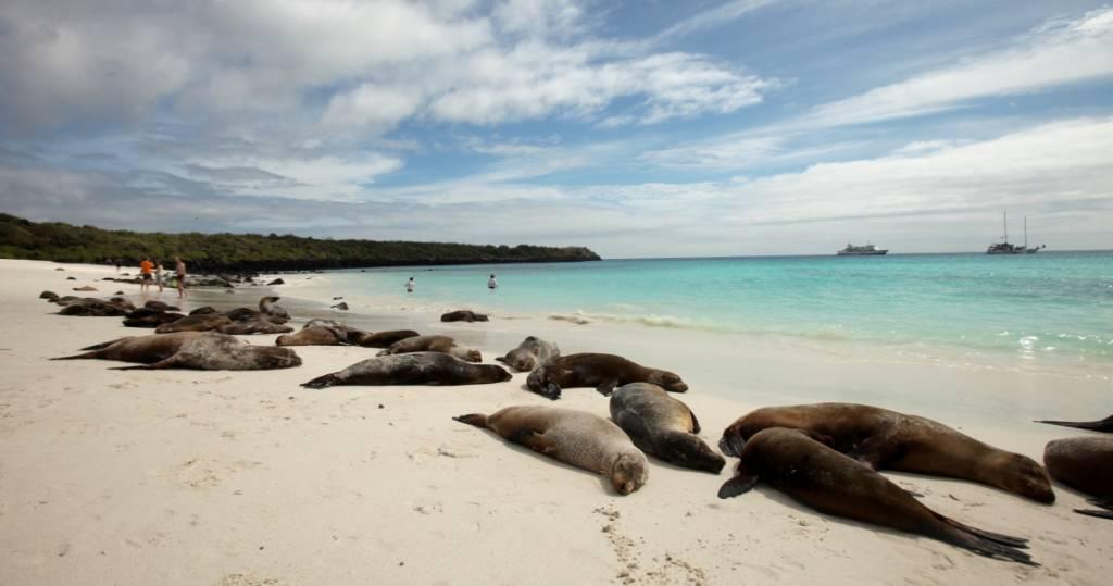 Galapagos PRO Insel Espanola Seelöwen am Strand Ausflug von Kreuzfahrt