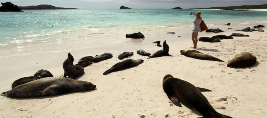 Seelöwen begrüßen die Besucher am Strand der Galapagos-Insel Española