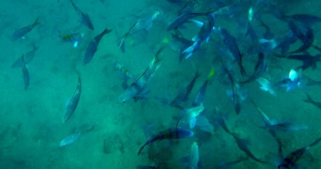 Galapagos PRO bunte Fischschwaerme vom Boot aus auf Insel Espanola