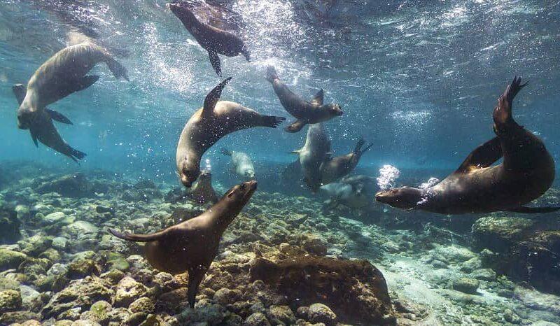 Galapagos PRO Coral II activity