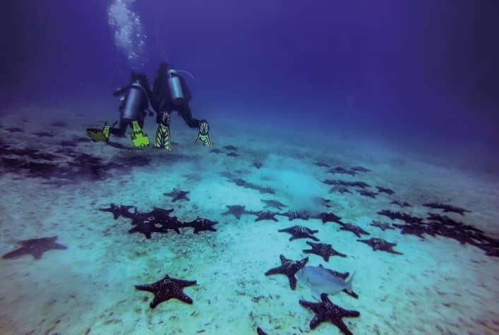 Galapagos PRO Galapagos Legend diving