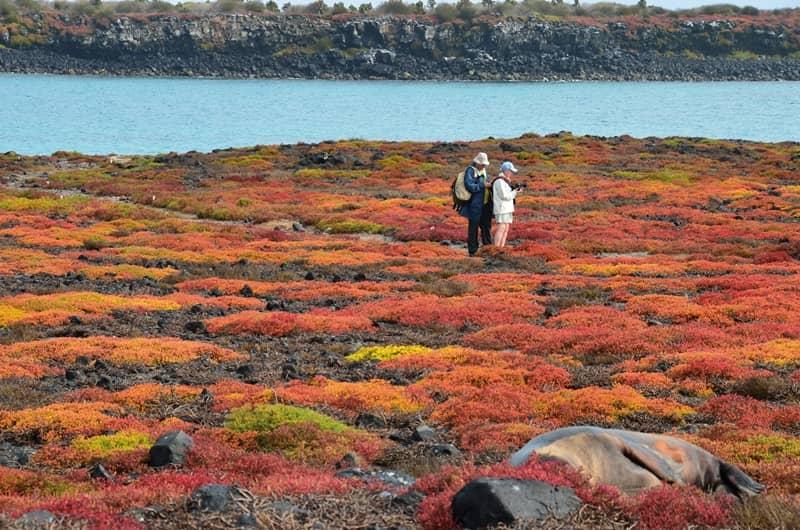 Galapagos PRO Galapagos activities