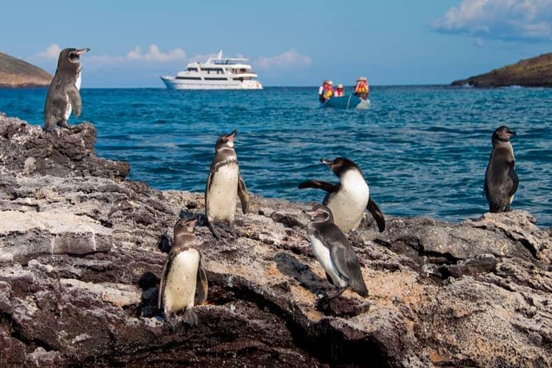 """Mit der """"Seastar Journey"""" die wunderschönen Galapagos Inseln erkunden"""