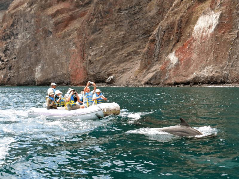 Galapagos PRO Beluga excursion