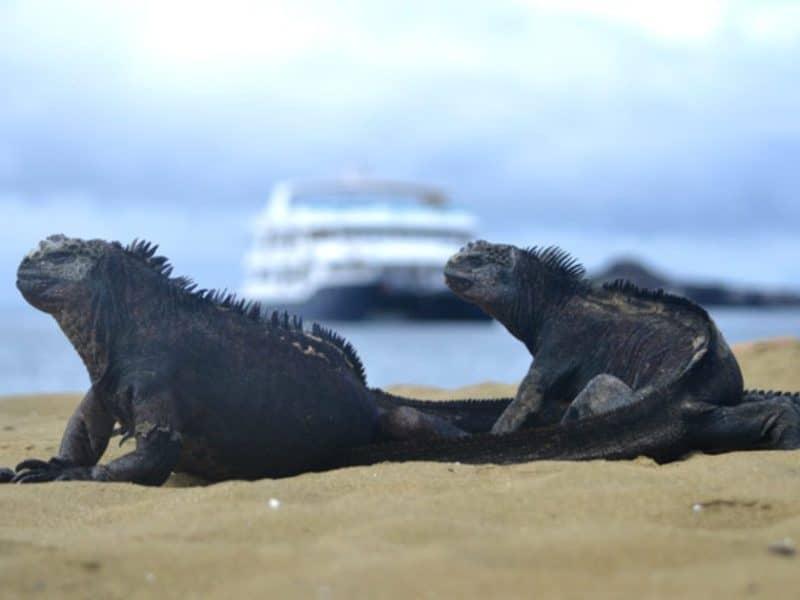 """Die Fauna und Flora von Galapagos mit der """"Cormorant"""" entdecken"""