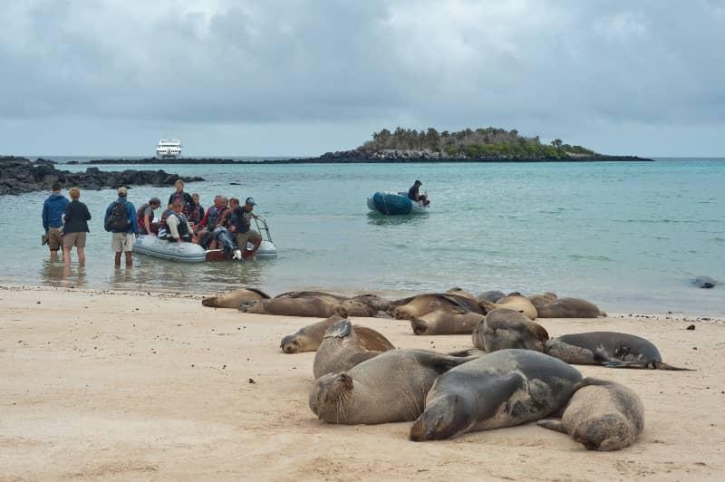 """Der """"Seaman Journey"""" lässt einen die Galapagos Inseln hautnah erleben"""