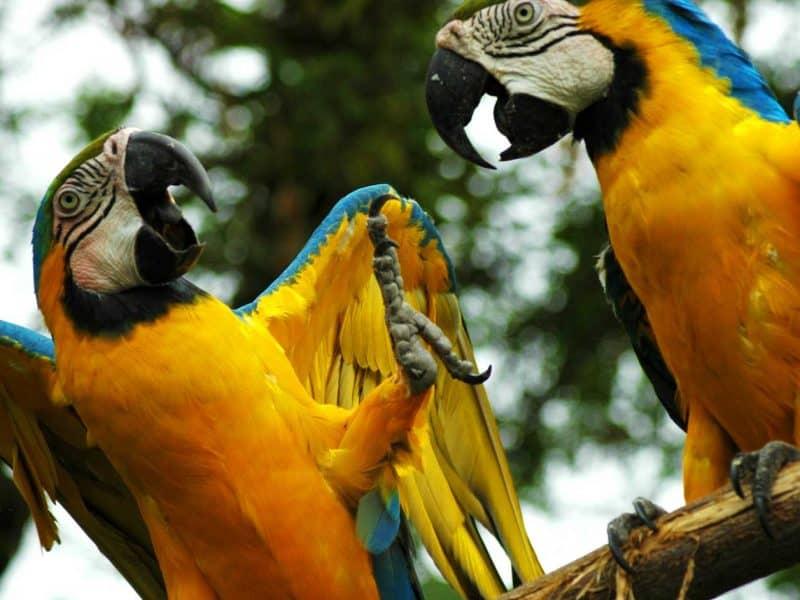 Tierwelt im Amazonas Gebiet - M/V Anakonda