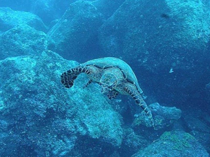 Galapagos PRO Humboldt Explorer Taucherlebnis
