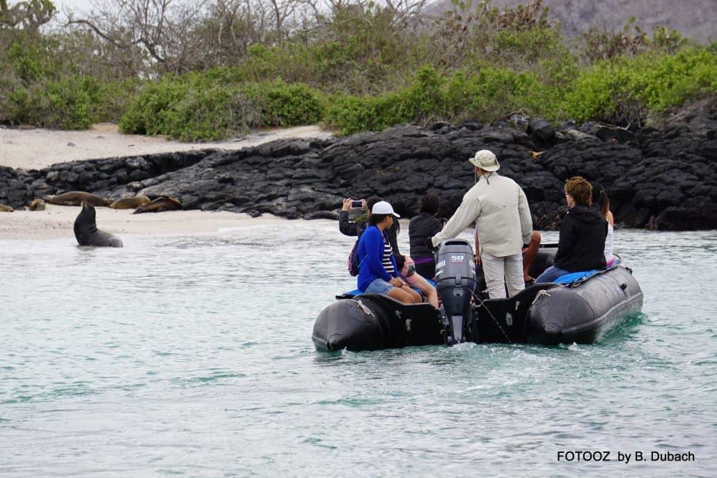 Mit Schlauchbooten geht es an Land während der Galapagos-Kreuzfahrt Danubio Azul