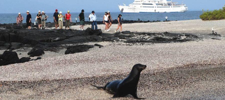 Die Seelöwen warten schon am Strand auf Besucher - Kreuzfahrten Galapagos-Inseln