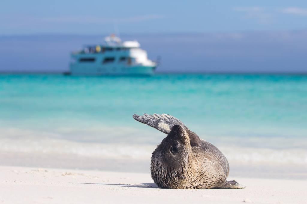 Wie ein Entdeckerauf den Inseln landen - Kreuzfahrten Galapagos-Inseln