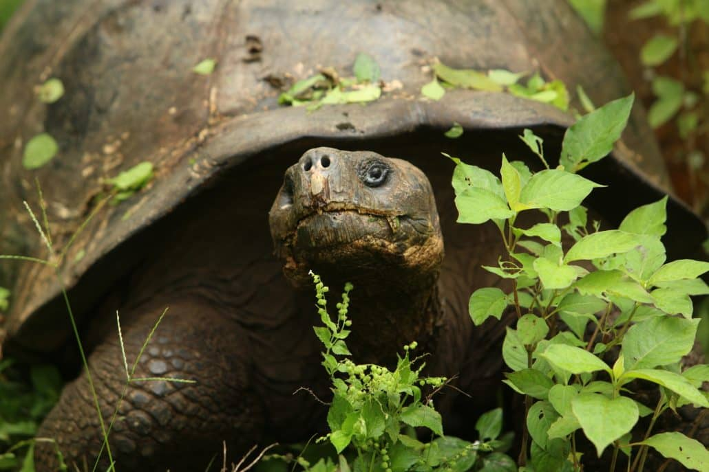 General Information on the Galapagos Islands - Nature & Wildlife