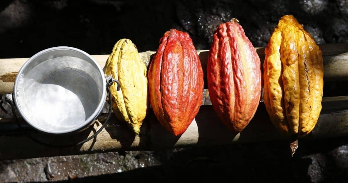 Farbenfrohe Kakaofrüchte - Top 10 Sehenswürdigkeiten im Amazonasgebiet