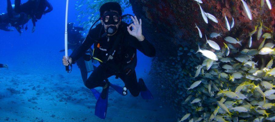 Zwischen Fischschwärmen tauchen- Tauchen auf den Galapagos-Inseln
