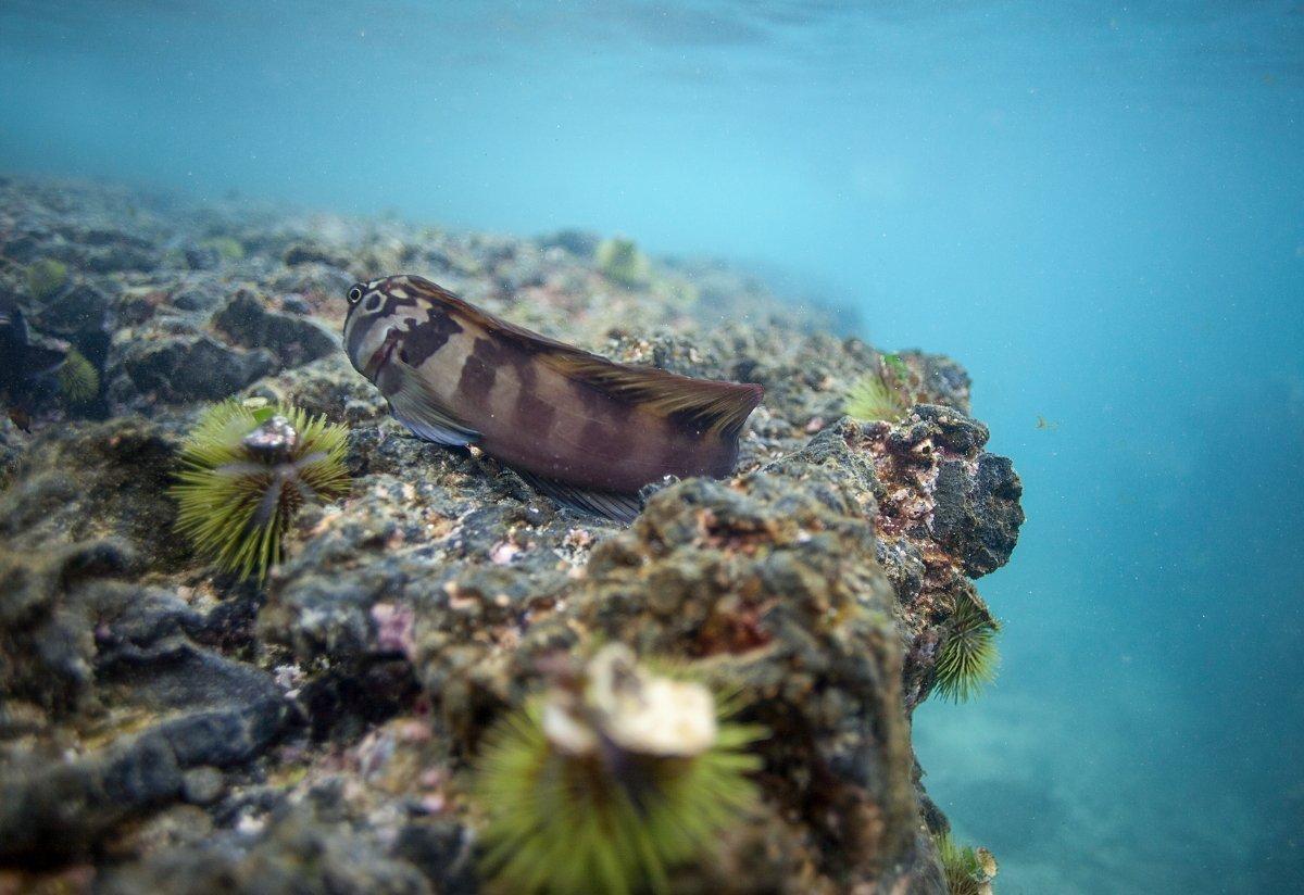 Artenvielfalt, wohin man auch schaut - Tauchen auf den Galapagos-Inseln