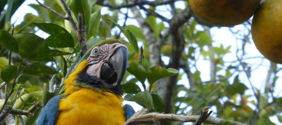 Neugierige Papageien - Top 10 Sehenswürdigkeiten im Amazonas-Gebiet Perus