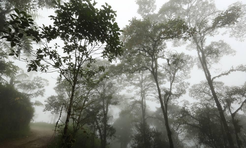 Tropische Bäume im sphärischen Nebel - Reisen im Garten Eden