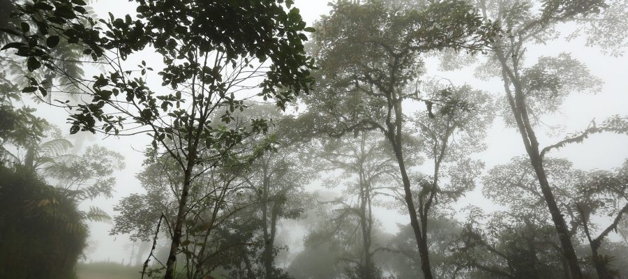 Mysterious cloud forest in Ecuador - Ecuador travel