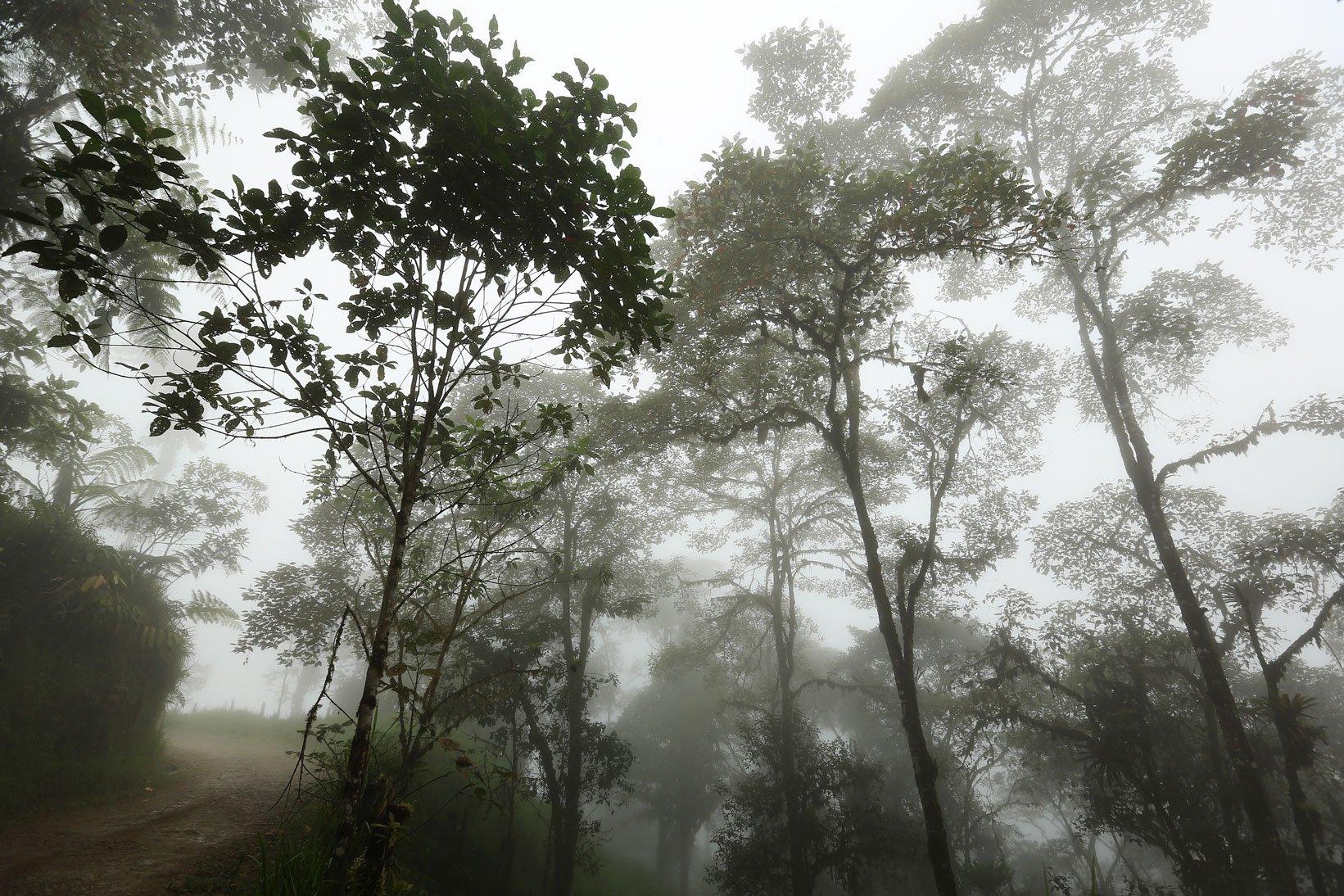 Mysterious cloud forest in Ecuador - Ecuador travel