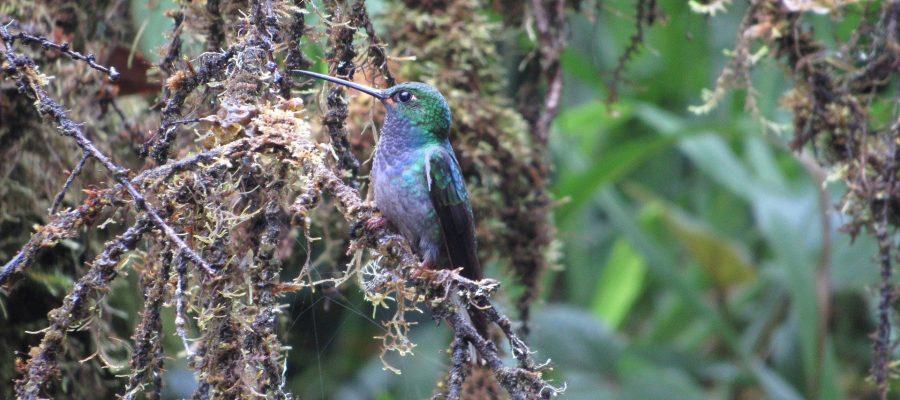 Trotz bunter Farben perfekt getarnt - Ornithologische Reisen
