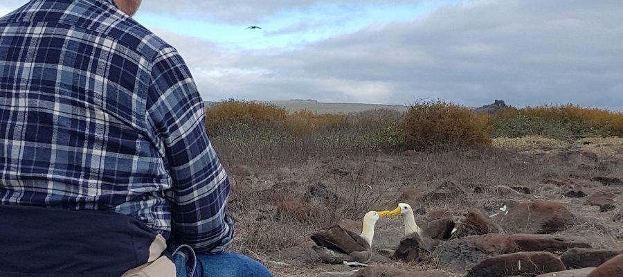 Aus respektvoller Entfernung kann man die Galapagos Albatrosse beim Turteln beobachten