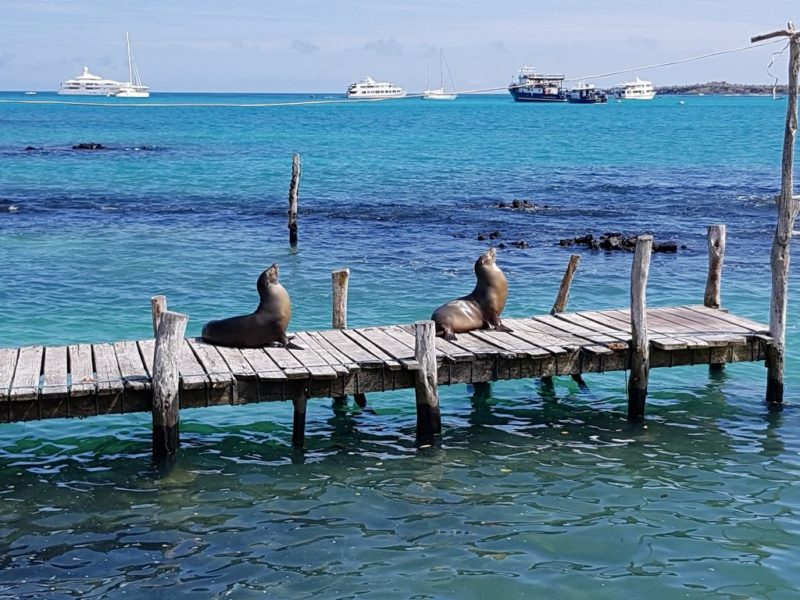 Seelöwen Island Santa Cruz Puerto Ayora