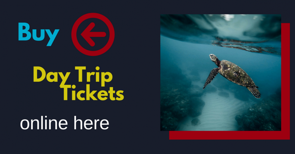 Book here your tickets for day trips in Ecuador and Galapagos