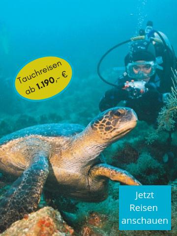 Tauchen Sie mit Meeresschildkröten auf den Galapagos-Inseln