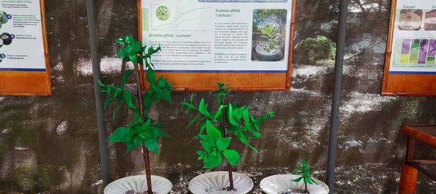 Charles Darwin Station au Galapagos - Entwicklungstadien Scalesien-Pflanzen