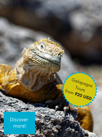 Galapagos bestseller tours from 920USD onwards