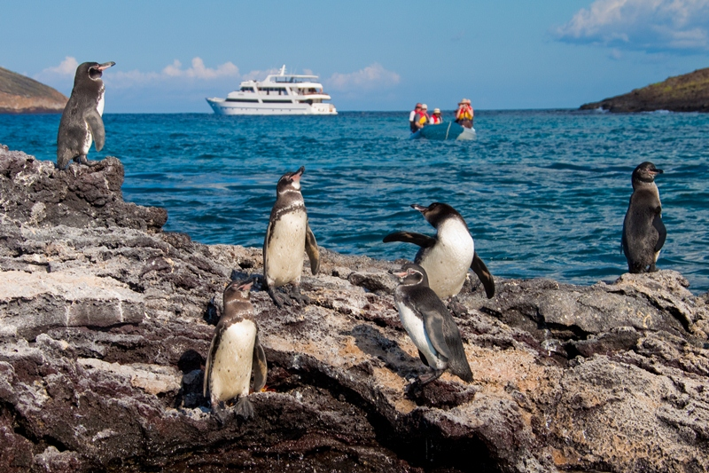 galapagos-grand-odyssey-with-penguins_5529158087_o