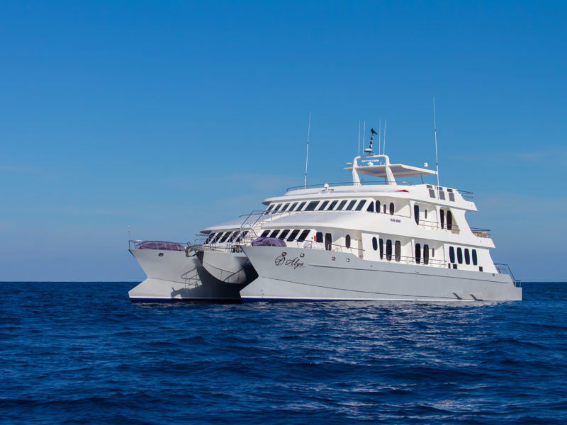 Galapagos Cruise Alya - A brand new catamran in the Galapagos archipelago