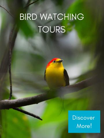 Best Ecuador Bird Watching Tour - Mindo, Quito and Banos