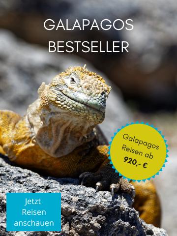 Entdecken Sie unsere Galapagos Bestseller Reisen - Galapagos Inseln Urlaub