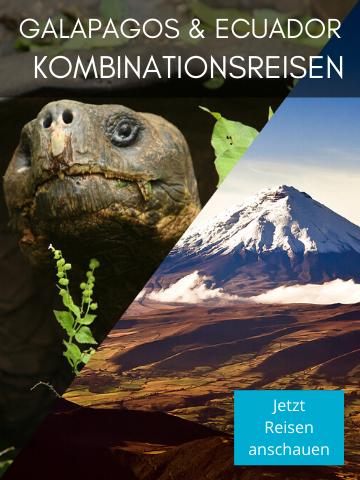 Kombinationsreisen in Galapagos