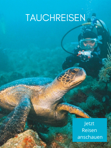 Tauchen auf den Galapagos Inseln - Galapagos Tauchreisen