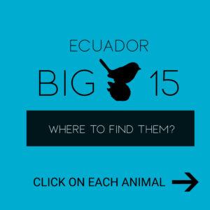 Ecuador Big 15 Collage Sign EN