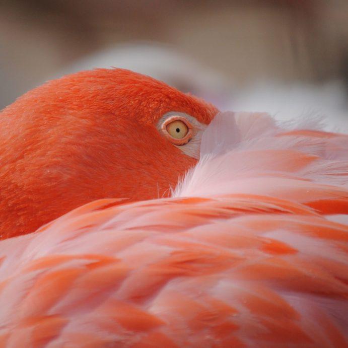 animal-avian-beak-357415