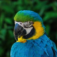 Parrot / Papagei