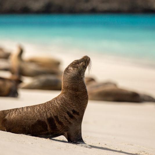 sea lion cropped