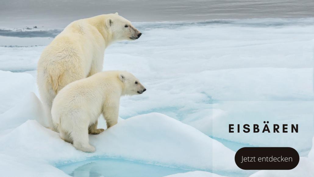 Tierwelten Eisbären - Galapagos PRO
