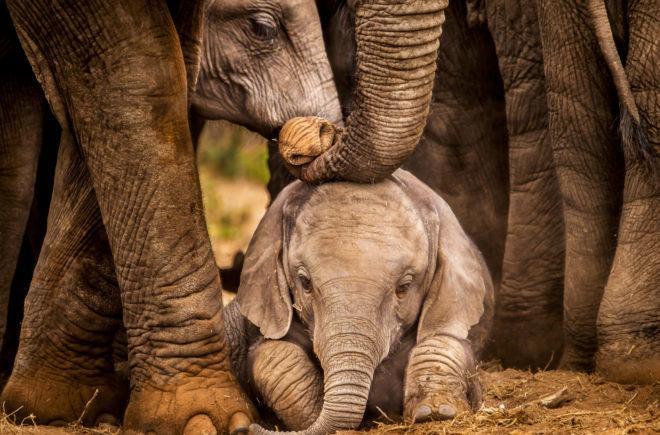 Tierwelten Elefanten