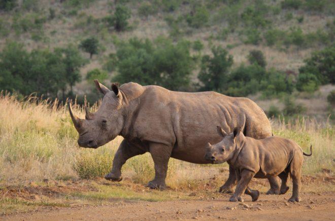 Tierwelten Nashorn