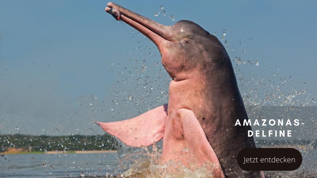 Tierwelten Amazonas-Flussdelfin - Galapagos PRO